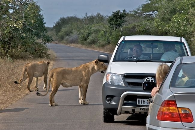 mukumela shuttles :: | Kruger National Park
